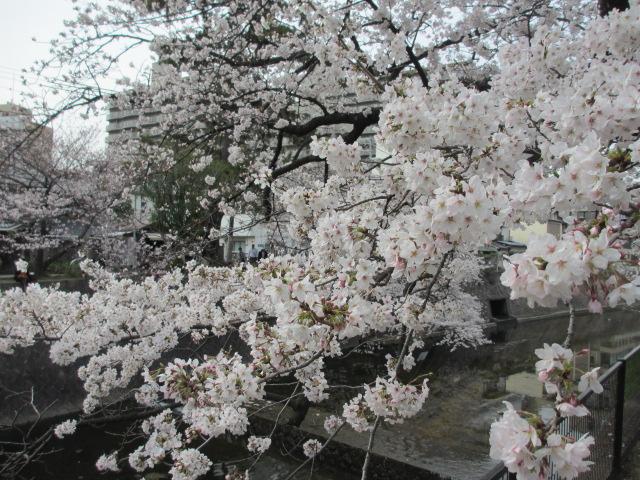 夙川公園2013-20