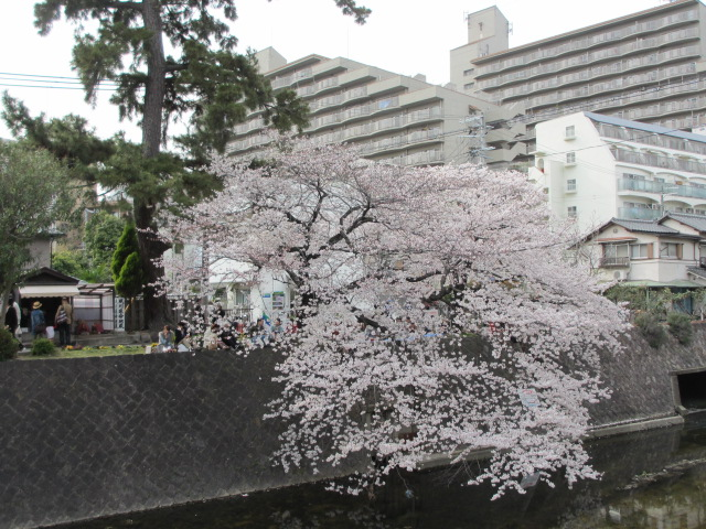 夙川公園2013-21