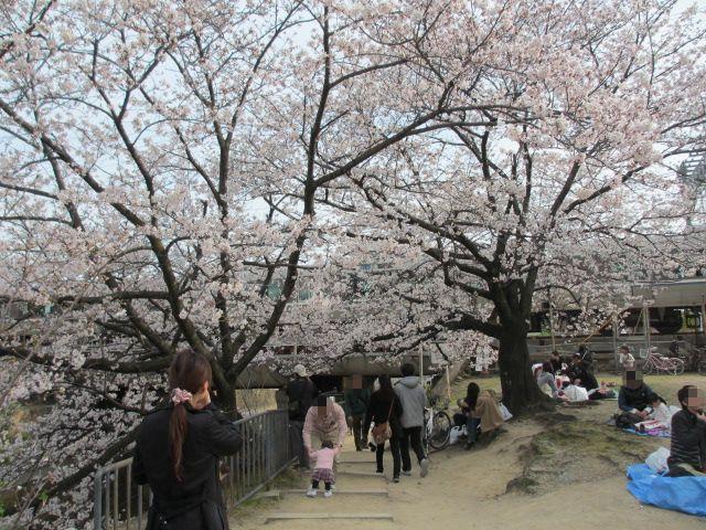 夙川公園2013-23