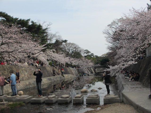 夙川公園2013-24