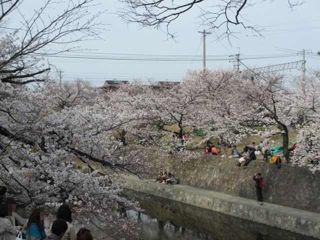 夙川公園2013-27