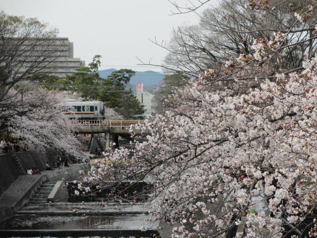 夙川公園2013-33