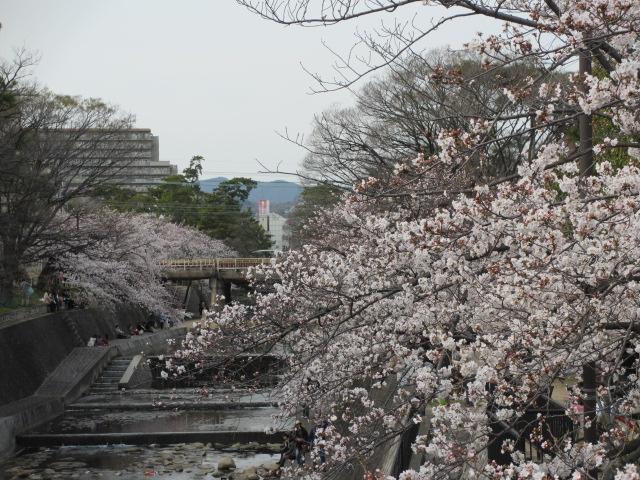 夙川公園2013-32
