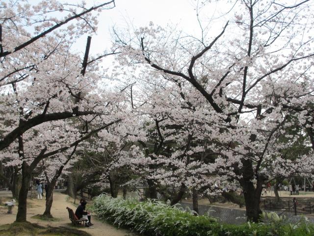 夙川公園2013-35