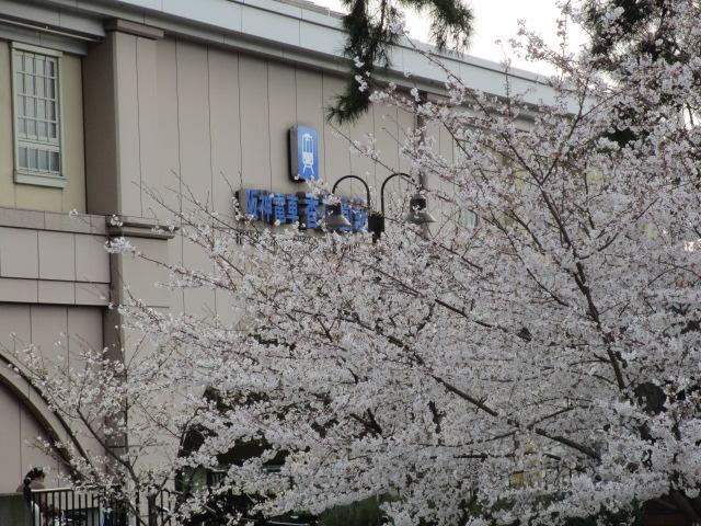 夙川公園2013-36