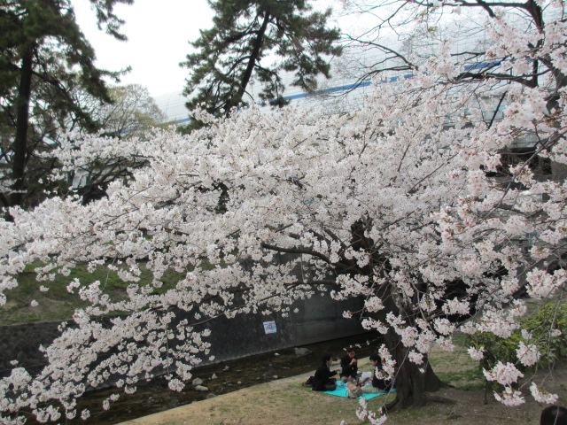 夙川公園2013-37