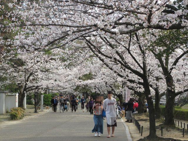 夙川公園2013-38