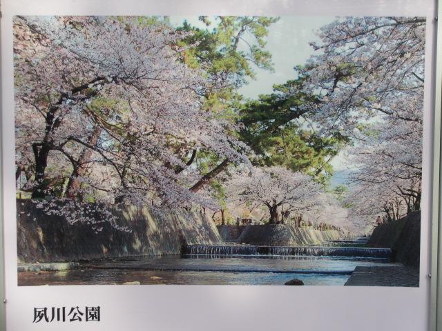 夙川公園2013-39