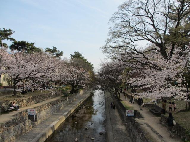 夙川公園2013-41
