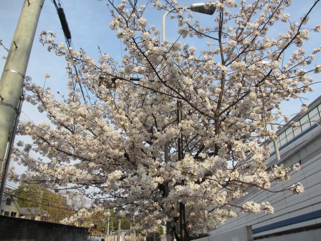 夙川公園2013-43