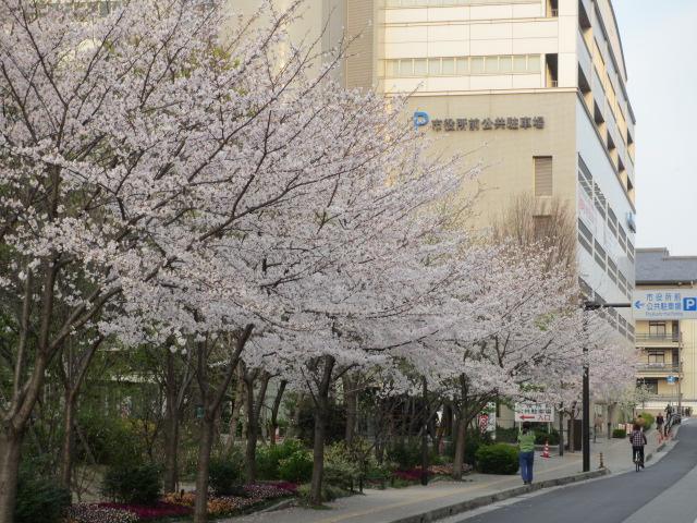 夙川公園2013-48
