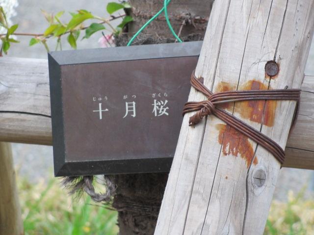 夙川公園2013-53