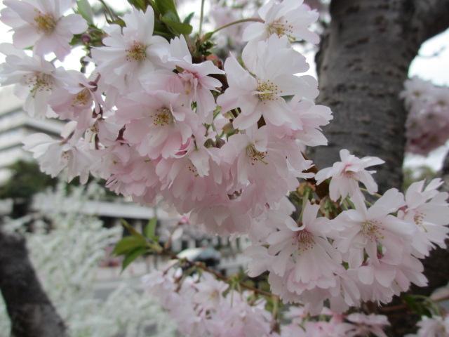 夙川公園2013-54