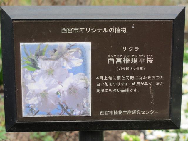 夙川公園2013-49