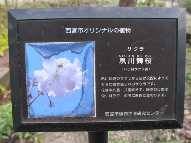 夙川公園2013-51