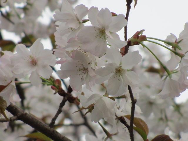 夙川公園2013-52