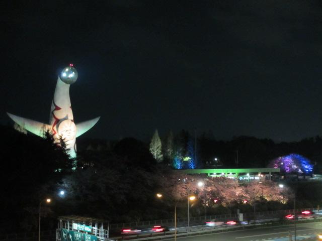 万博記念公園 夜桜2013-1