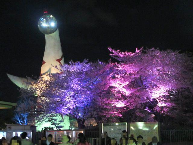 万博記念公園 夜桜2013-2