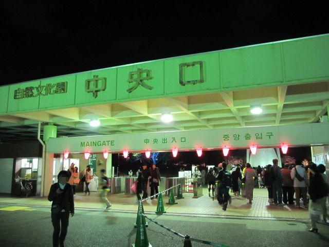 万博記念公園 夜桜2013-3