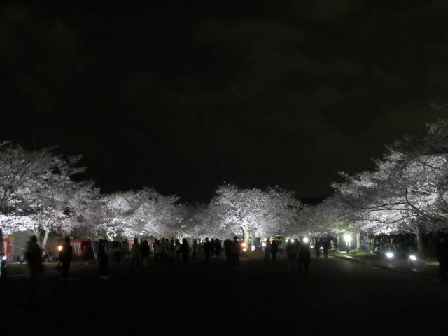 万博記念公園 夜桜2013-24