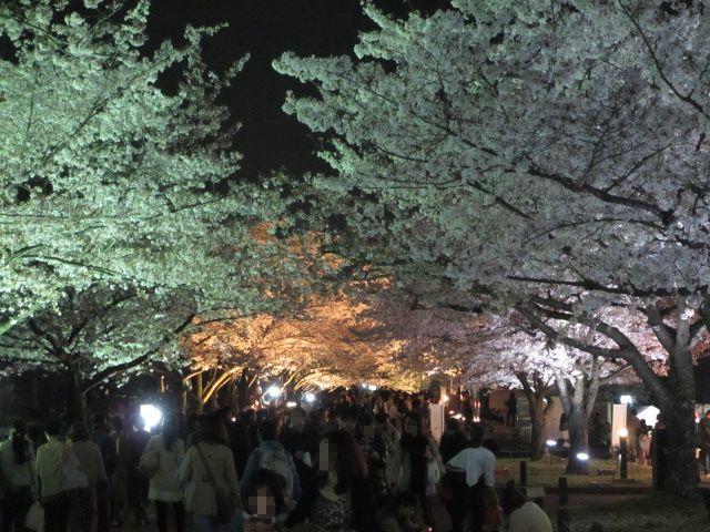 万博記念公園 夜桜2013-27
