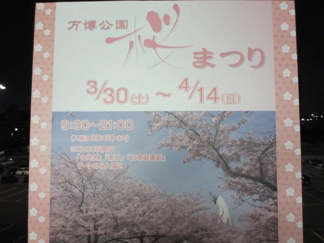 万博記念公園 夜桜2013-5
