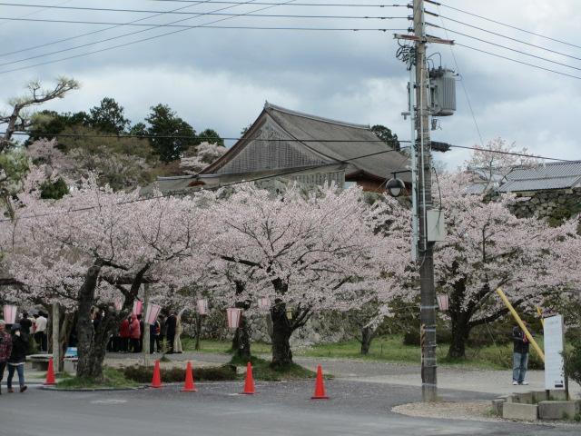 篠山城跡2013-3