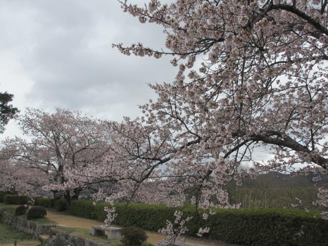 篠山城跡2013-18