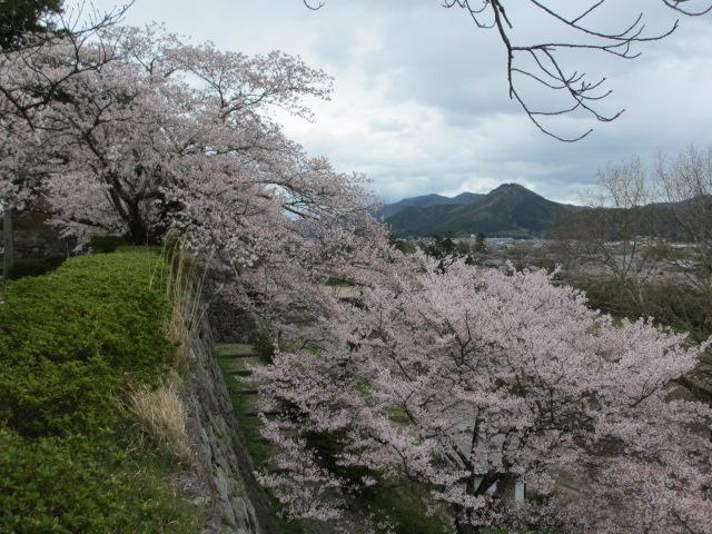 篠山城跡2013-21