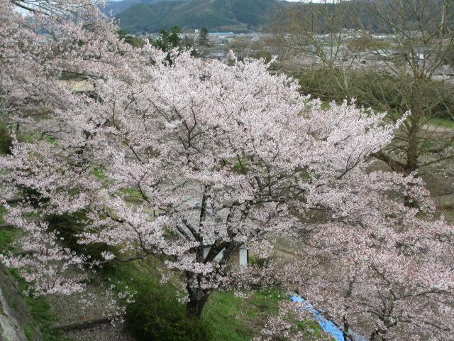 篠山城跡2013-20