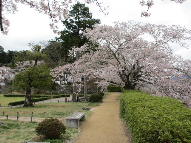 篠山城跡2013-23