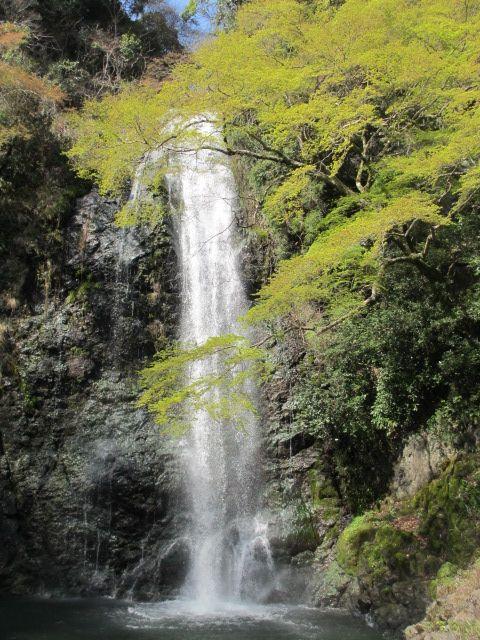 箕面滝2013春-13