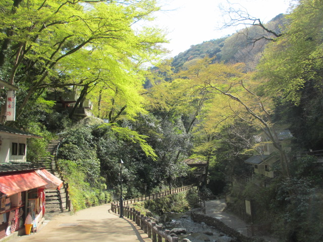 箕面滝2013春-16