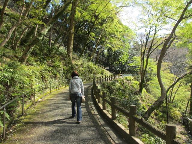 箕面滝2013春-18