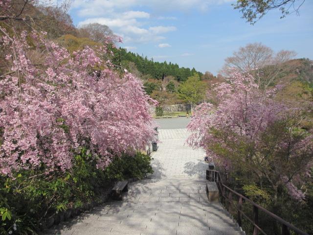 勝尾寺2013-22
