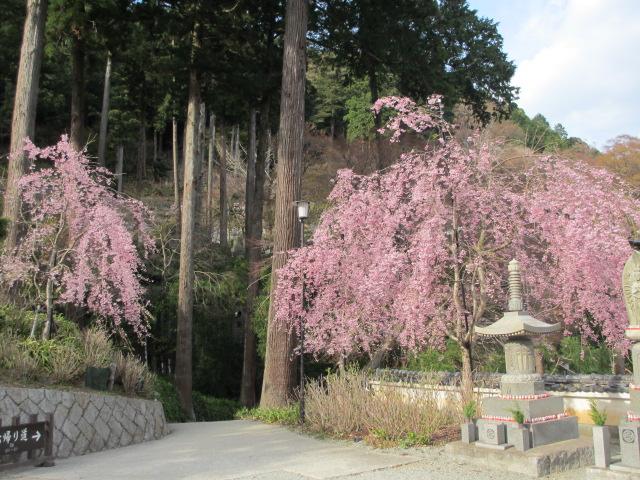 勝尾寺2013-42