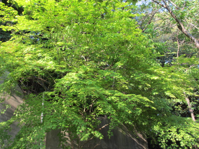 須磨寺-57
