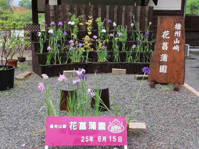 播州山崎花菖蒲園-7