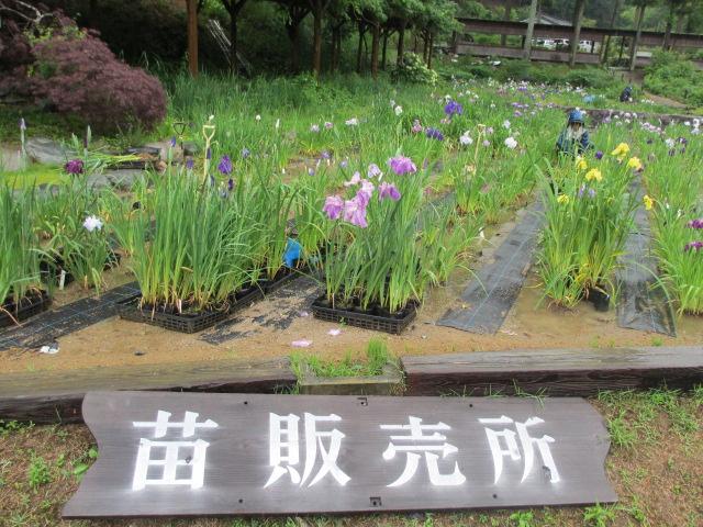 播州山崎花菖蒲園-16