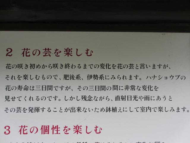播州山崎花菖蒲園-45