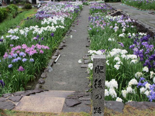 播州山崎花菖蒲園-49