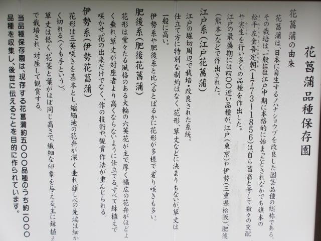 播州山崎花菖蒲園-47