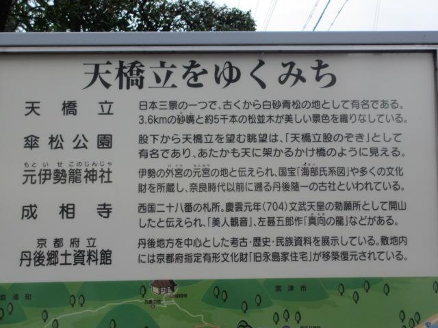 傘松公園-9