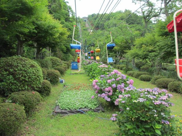 傘松公園-11