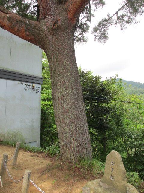 傘松公園-26