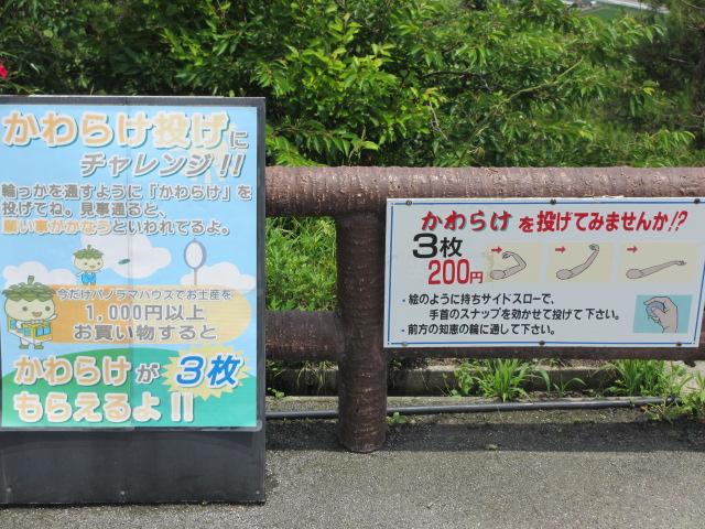 傘松公園-40