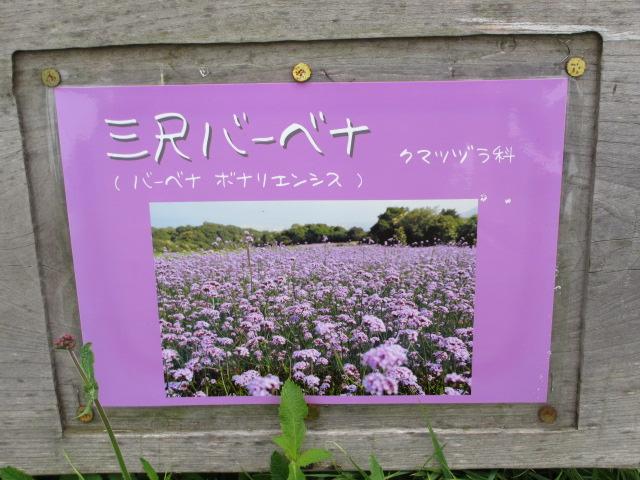 あわじ花さじき2013年7月-2