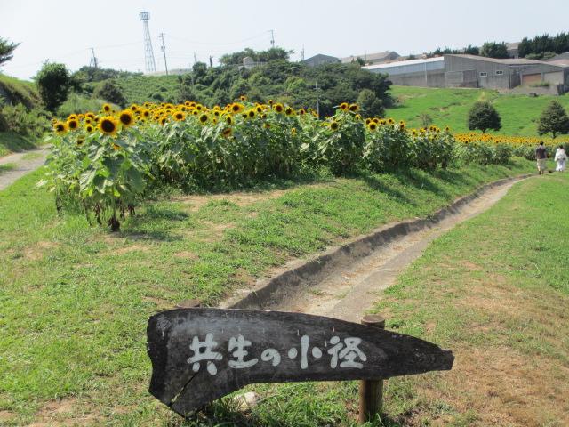 あわじ花さじき2013年8月-30