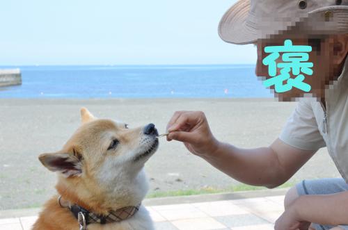 DSC_0454moji (1)
