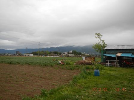 麦と雨 (2)